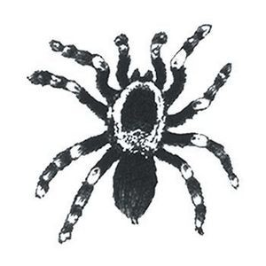 Small Tarantula Temporary Tattoo